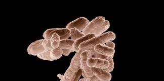 yeast infection vs uti